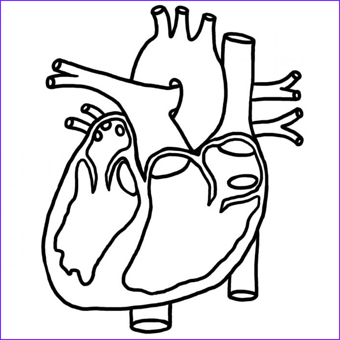 Human Anatomy Coloring Pages Beautiful Stock Human Heart Coloring for Kids Health Of