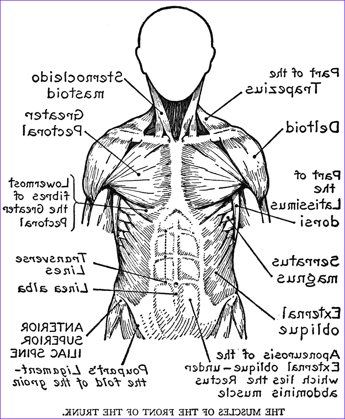 Human Anatomy Coloring Pages Cool Collection Human Body Systems Coloring Pages Coloring Home