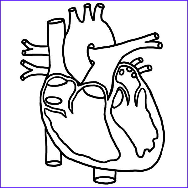 Human Anatomy Coloring Pages Luxury Images 40 Heart Anatomy Coloring Pages Anatomy Coloring Pages