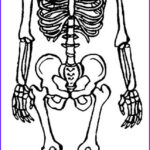 Human Anatomy Coloring Pages Luxury Images Printable Skeleton Coloring Pages For Kids