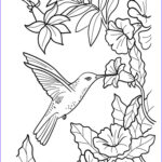 Hummingbird Coloring Pages Awesome Images Hummingbird Coloring Pages Download And Print Hummingbird