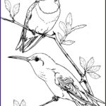 Hummingbird Coloring Pages Awesome Photos Hummingbird Coloring Pages