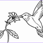 Hummingbird Coloring Pages Beautiful Gallery Hummingbird Coloring Pages Bestofcoloring