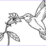 Hummingbird Coloring Pages Beautiful Stock Pin By Tonie Clark On Stain Glass Pattern