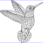 Hummingbird Coloring Pages Best Of Collection Royalty Free Hummingbird Clip Art Vector