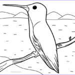 Hummingbird Coloring Pages Best Of Photos Printable Hummingbird Coloring Pages For Kids