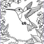 Hummingbird Coloring Pages Cool Gallery Printable Hummingbird Coloring Pages