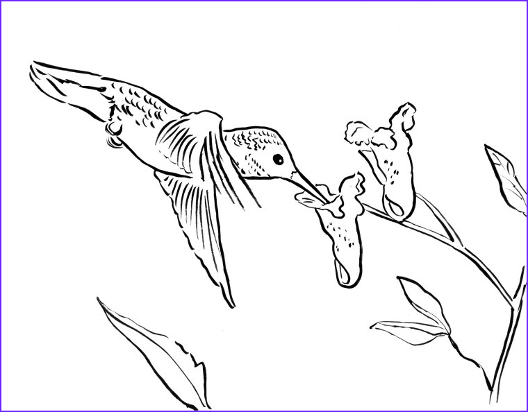 Hummingbird Coloring Pages Cool Photos Coloring Pages Archives Page 2 Of 7 Art Starts for Kids