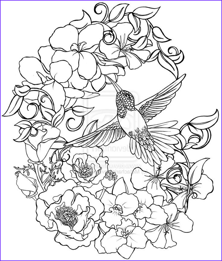 Hummingbird Coloring Pages for Adults Beautiful Stock Hummingbird with Flowers Tattoo by Metacharis On