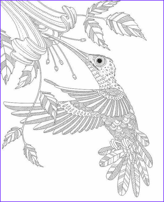 Hummingbird Coloring Pages for Adults Best Of Stock Coloring Hummingbirds and Black On Pinterest