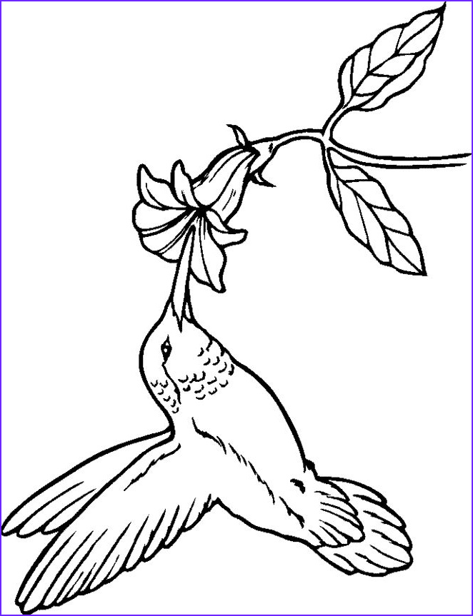 Hummingbird Coloring Pages for Adults Luxury Image Hummingbird Coloring Pages Google Search