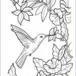 Hummingbird Coloring Pages Inspirational Gallery 20 Free Printable Hummingbird Coloring Pages