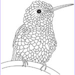 Hummingbird Coloring Pages Luxury Photos Hummingbird Coloring Pages Bestofcoloring