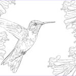 Hummingbird Coloring Pages Luxury Photos Realistic Ruby Throated Hummingbird Coloring Page