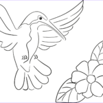 Hummingbird Coloring Pages Luxury Stock Hummingbird Coloring Page
