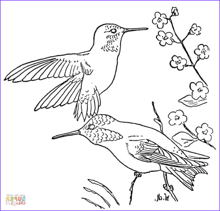 Hummingbird Coloring Pages Unique Gallery Rufous Hummingbird Coloring Page