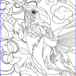 Hummingbird Coloring Pages Unique Photos Hummingbird Coloring Pages Bestofcoloring