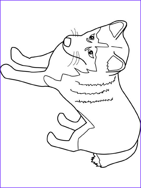 Husky Coloring Page Beautiful Collection Dog Color Pages Printable
