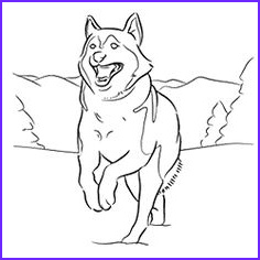 Husky Coloring Page Inspirational Photos Dog Sled Coloring Page