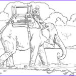 Indian Elephant Coloring Pages Printable Awesome Gallery Riding Indian Elephant Coloring Page
