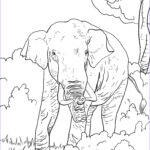 Indian Elephant Coloring Pages Printable Beautiful Collection Indian Elephant Coloring Page Coloring Home