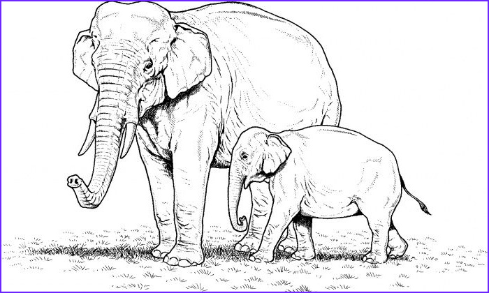 Indian Elephant Coloring Pages Printable Beautiful Gallery Elephant Coloring Pages