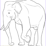Indian Elephant Coloring Pages Printable Unique Image Indian Elephant Coloring Page Free Elephant Coloring
