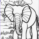 Indian Elephant Coloring Pages Printable Unique Images 24 Best Y Blank Pattern Elephants Images On Pinterest