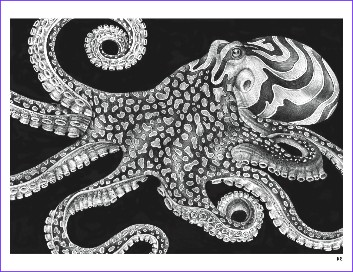 Intricate Coloring Book Unique Collection Intricate Ink Animals In Detail Coloring Book