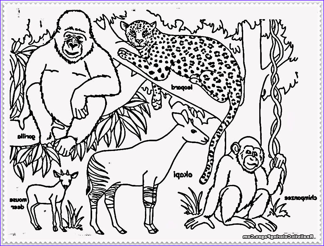 Jungle Animals Coloring Pages Beautiful Photography Jungle Animals Coloring