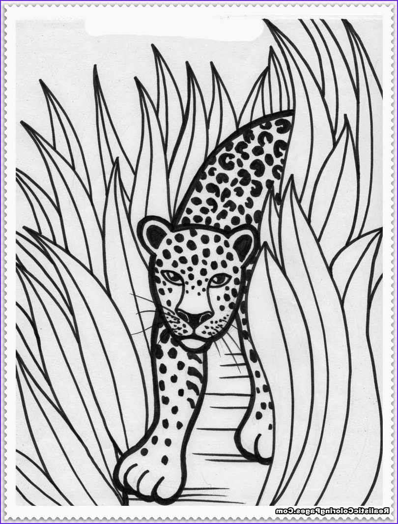 realistic jungle animal coloring pages