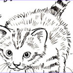Kittens Coloring Pages Cool Photos Kitten Coloring Page Art Starts for Kids