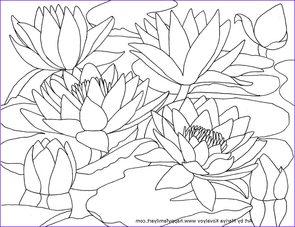 Lilies Coloring Awesome Gallery Waterlilies