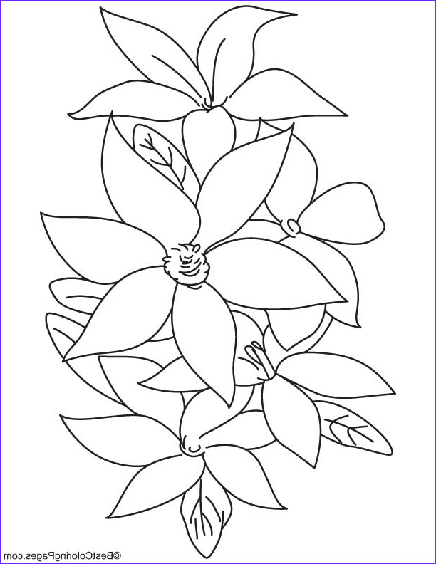 lily flowers coloring page 1d6159