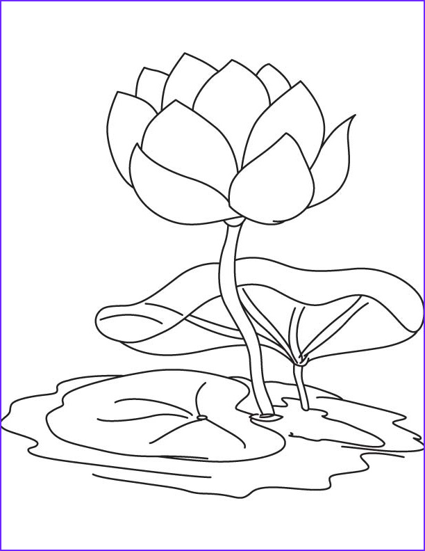 lily pad flower coloring pages