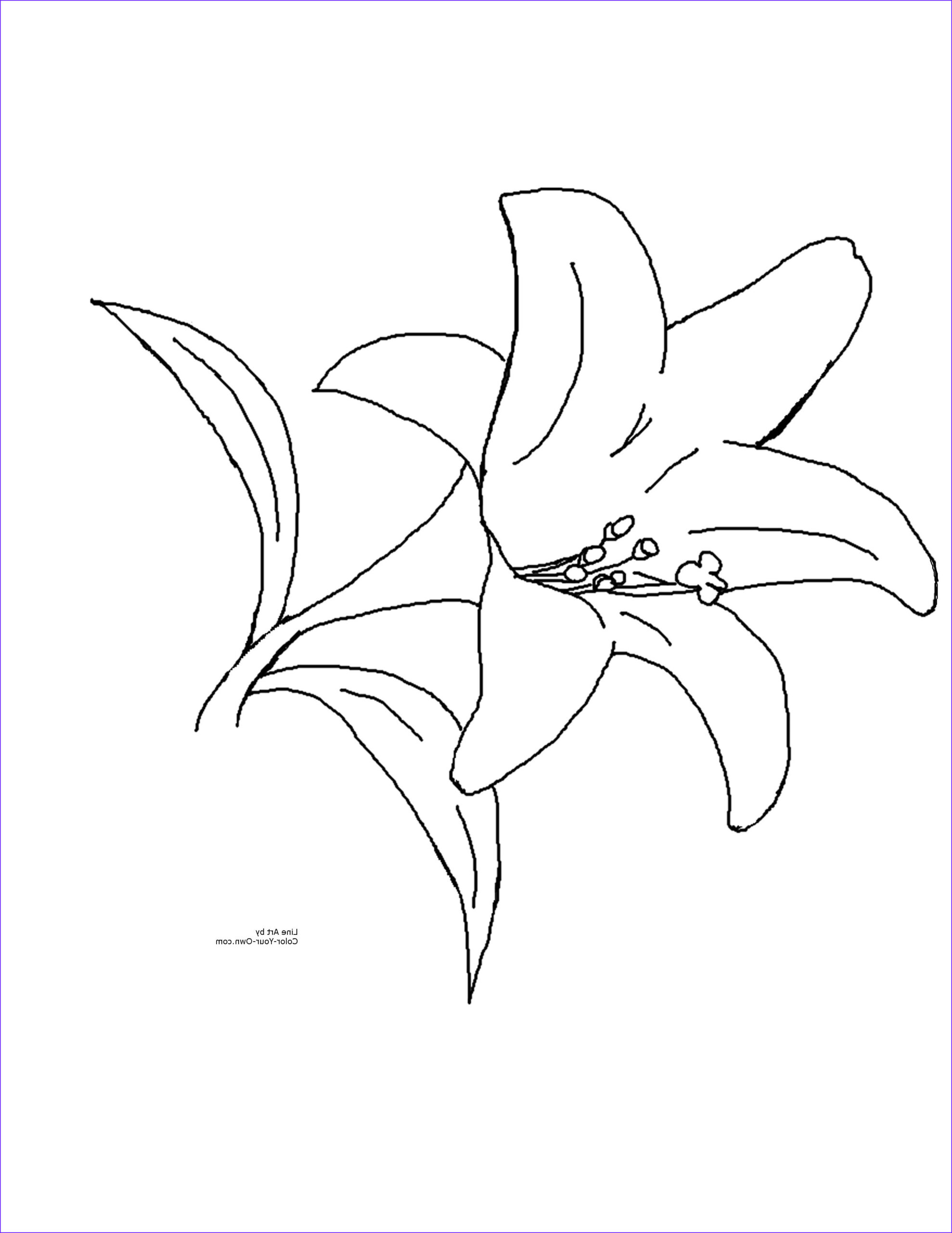 water lily flower coloring pages