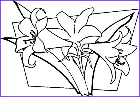 Lilies Coloring Inspirational Collection Lilies Coloring Page