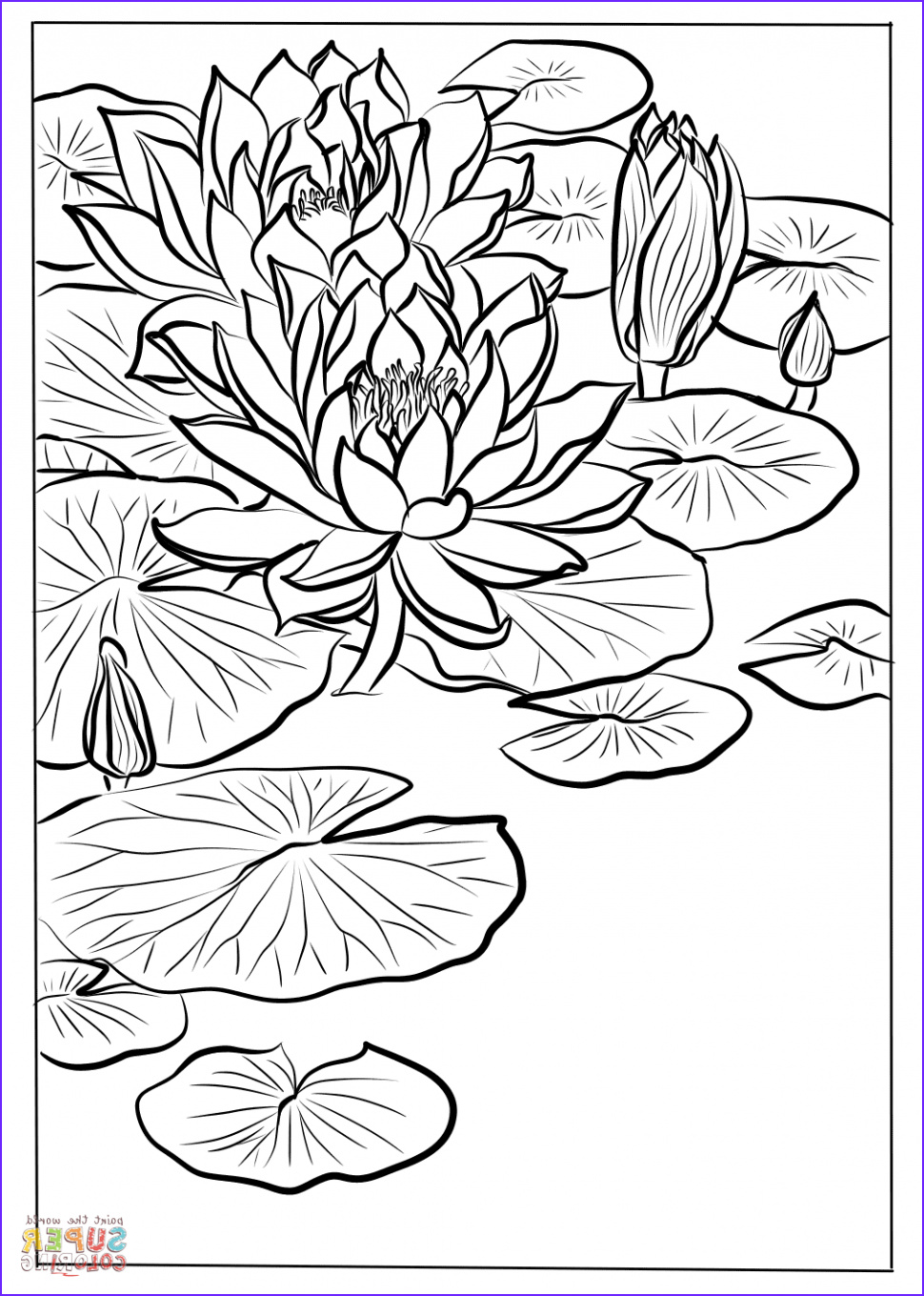 Lily Coloring Beautiful Image Water Lily Flower Drawing at Getdrawings