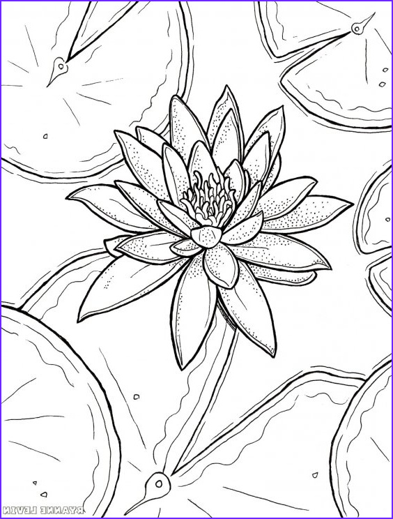 Lily Coloring Beautiful Photos Free Printable Water Lily Coloring Page Download – Ryanne
