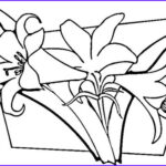 Lily Coloring Beautiful Photos Lilies Coloring Page