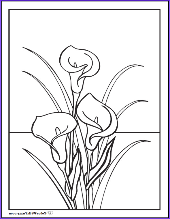 Lily Coloring Beautiful Photos Lily Coloring Pages Customize 12 Pdf Printables