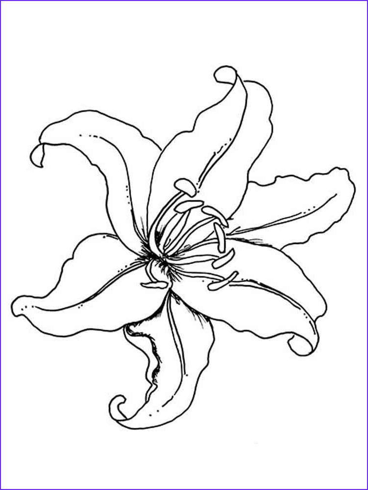 Lily Coloring Inspirational Photography Tiger Lily Flower Drawing at Getdrawings