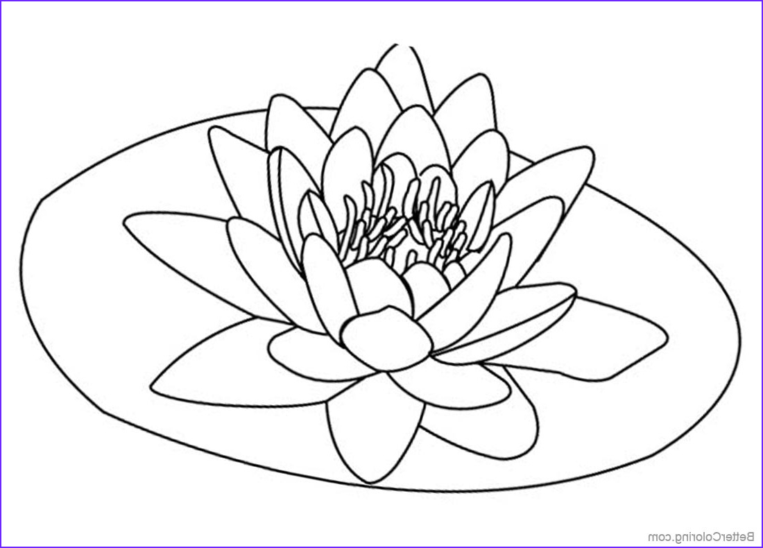 Lily Coloring Inspirational Photos Pond Coloring Pages Lily Pad Flower Free Printable