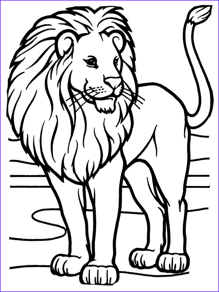Lion Coloring Book Elegant Photos 18 Best Zoo Animals Images On Pinterest