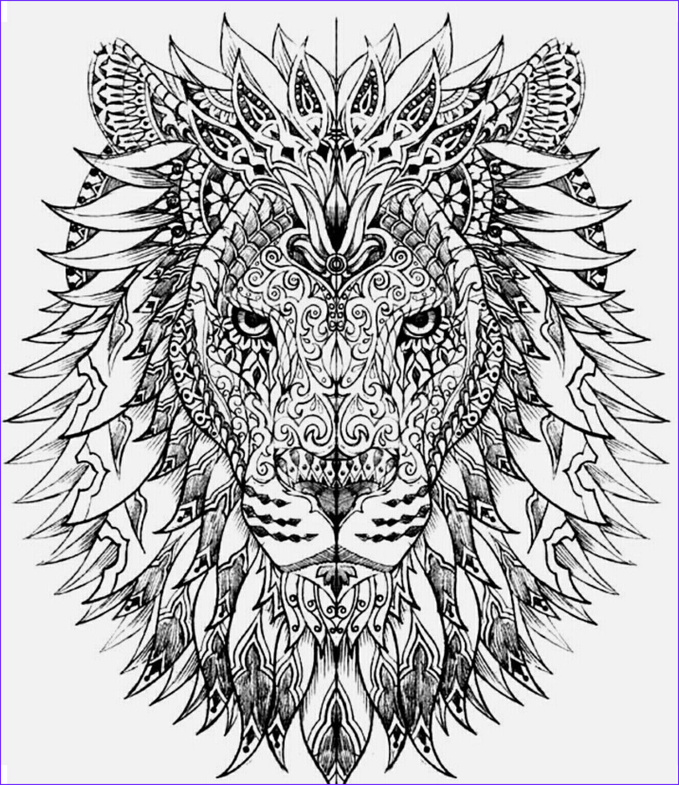 Lion Coloring Book Luxury Stock Lion Color Page Coloring Book Pages