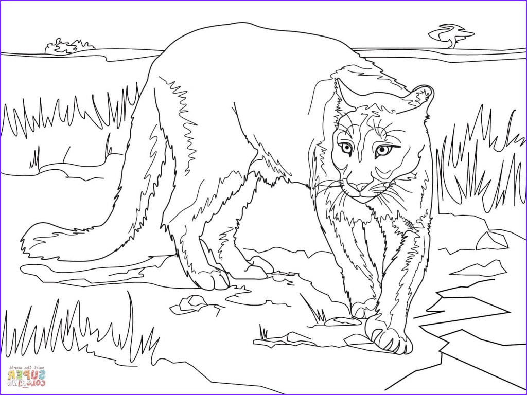 Lion Coloring Pages Beautiful Image South America Animal Coloring Pages Sketch Coloring Page