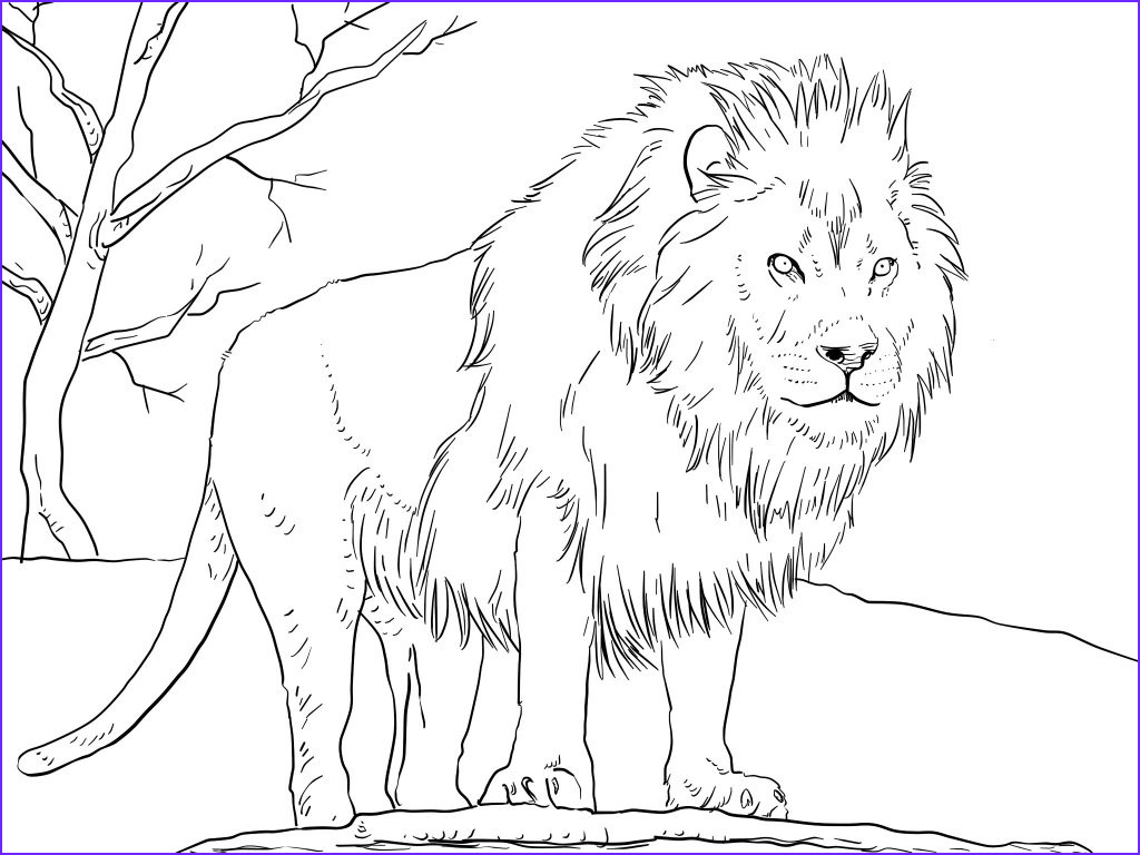 Lion Coloring Pages Best Of Gallery 6247 Afrikanskij Lev
