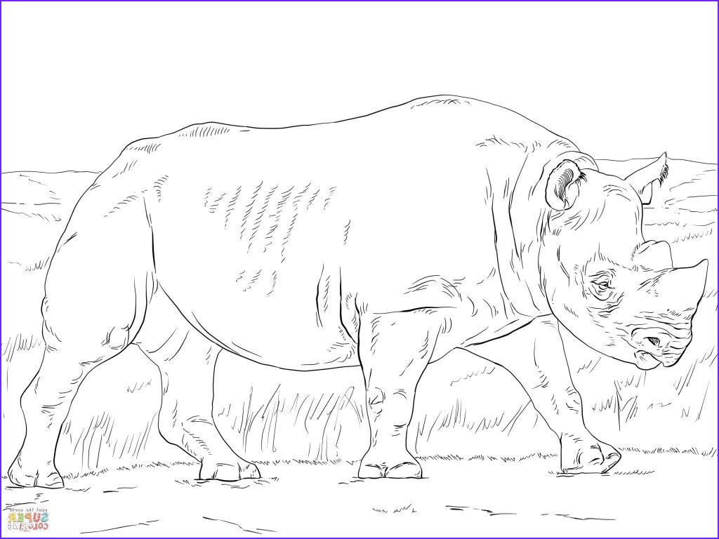 coloring pages rhino black rhinoceros coloring page