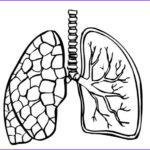 Lungs Coloring Page Awesome Collection Coloring Page Lungs Img 9488