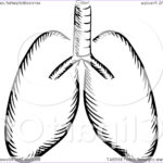 Lungs Coloring Page Awesome Photography Clipart Of Black And White Sketched Human Lungs Royalty